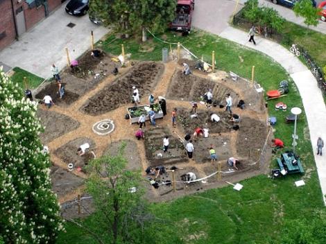 community-garden-in-the-making1